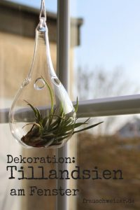 Dekoration am Fensterbrett Steinblumen von FrauSchweizer