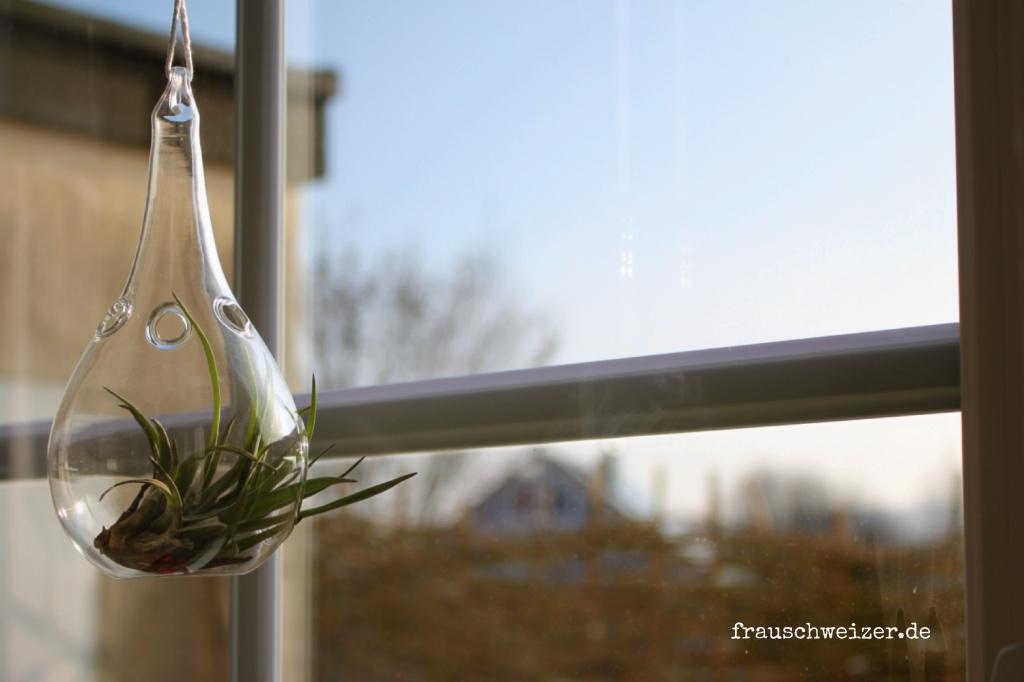 Steindeko am Fenster mit Tillandsien von FrauSchweizer