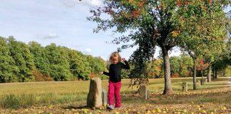 Birnbaum- Allee und Grenzsteinpfad