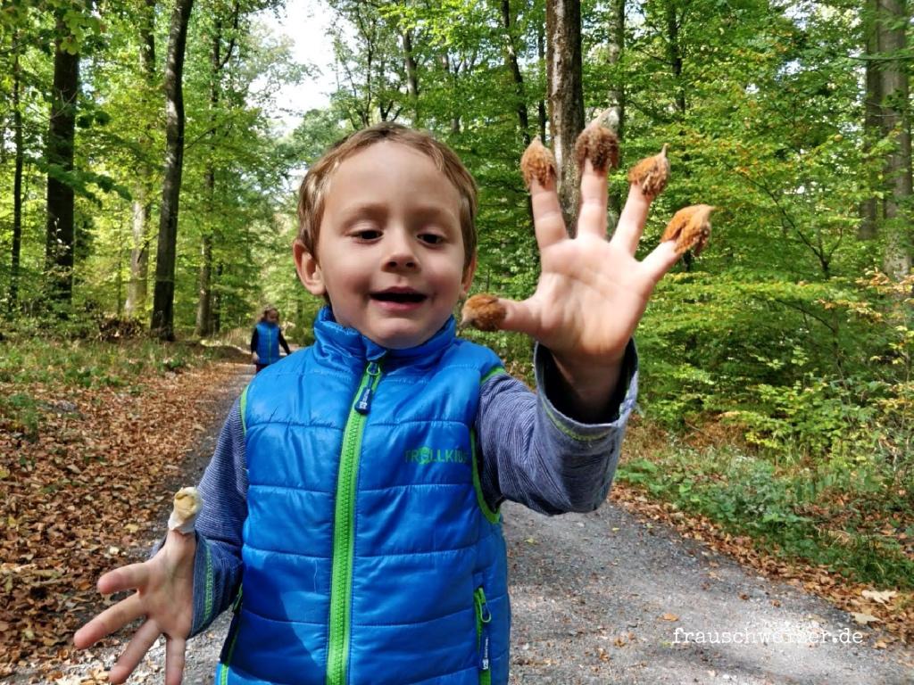 Wald sammeln bei Kleingartach