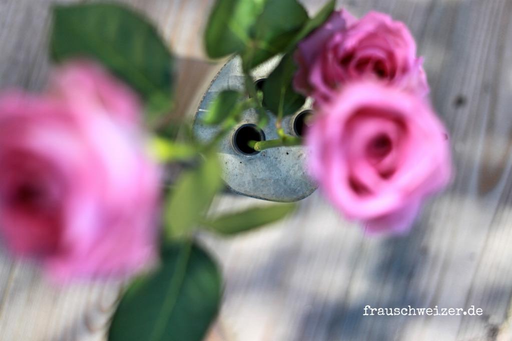 beton - Vase von oben mit Rosen
